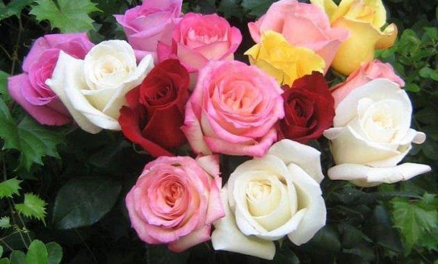 Ungkapkan Rasa Kasih Sayangmu Dengan Memberikan 3 Bunga Berikut Ini - Bunga Mawar