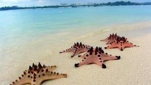 Wisata ke Belitung