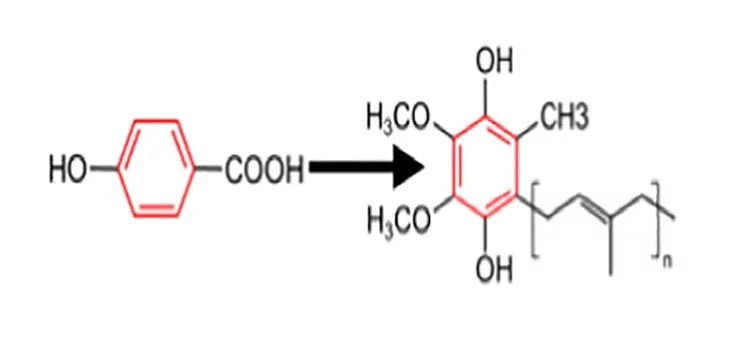 Insight into the molecular hydrogen effect on coenzyme Q