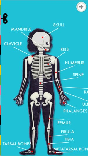 The Human Body by Tinybop Game Ios Free Download
