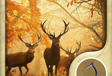 Autumn Wallpaper: Best HD Wallpapers App Ios Free Download