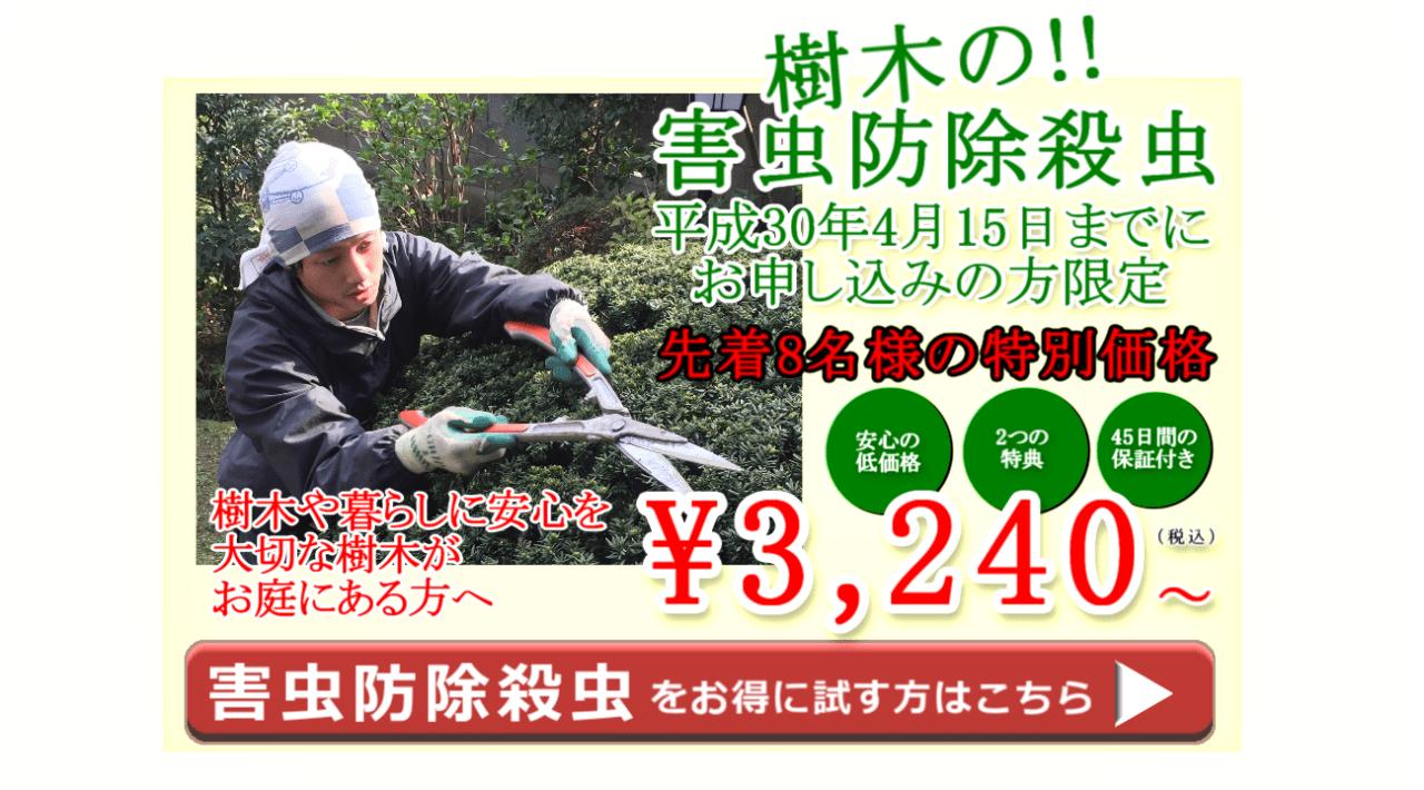 樹木の害虫駆除防除殺虫の3420円からの期間限定サービス