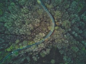 A narrow curved road in a forest.