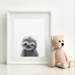 Impishly Cute Sloth