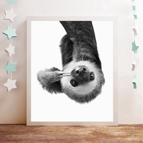 Curious, Thinking Sloth