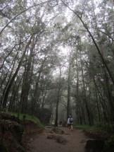 Dark Forest Hogwarts = Hutan Terlarang Dieng? #eeaaa