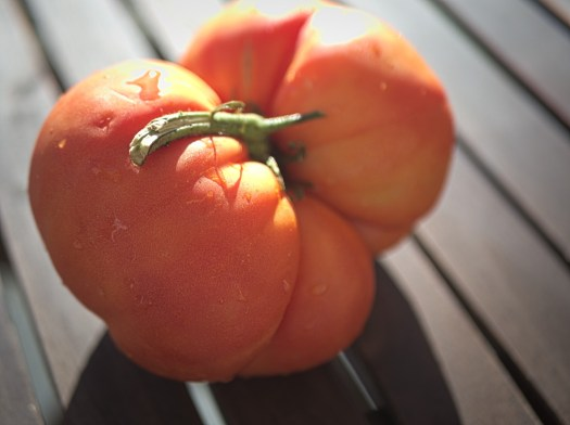 Odd shaped tomato