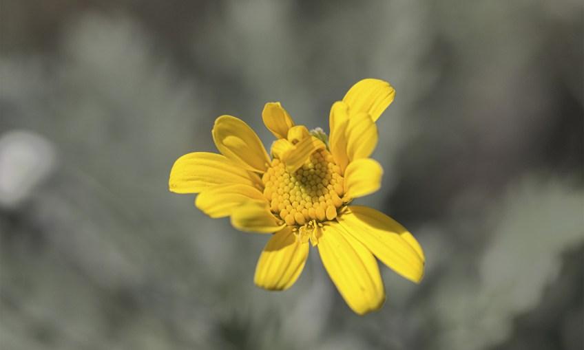 Fibonacci Flower surviving autumn