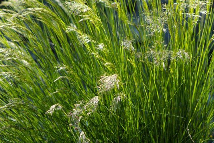 GrassValArgentera