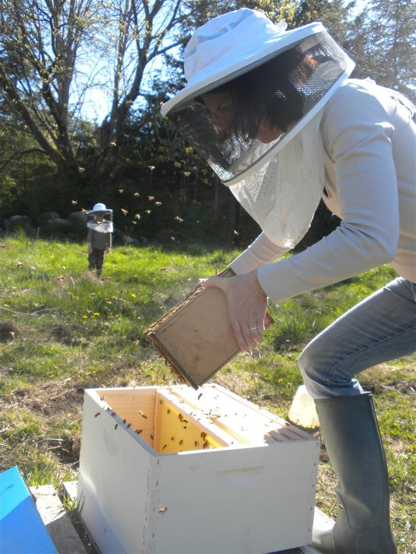 a bee i do become essay julie trimingham num eacute ro cinq pouring the colony into the hive