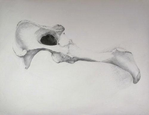 Lamb's Hip