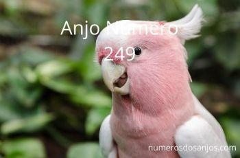 Anjo Número 249 – Significado do anjo número 249