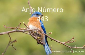 Anjo número 443 – Significado do anjo número 443