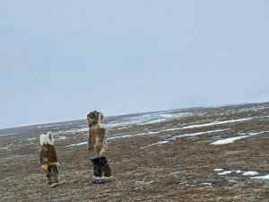 Photo courtesy of Nicole Nalungiaq, Naujaat.<br /> Amy Milortok and Lucy Lynn Nalungiaq on their way to Kugaaruk from Naujaat. Spring 2016.