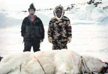 2005Daisy Loreen_WINNER.jpg Daisy Loreen Hall Beach James Kukkik and Jopie Kaernerk caught a polar bear a while ago ... it was sometime in the 2000's.