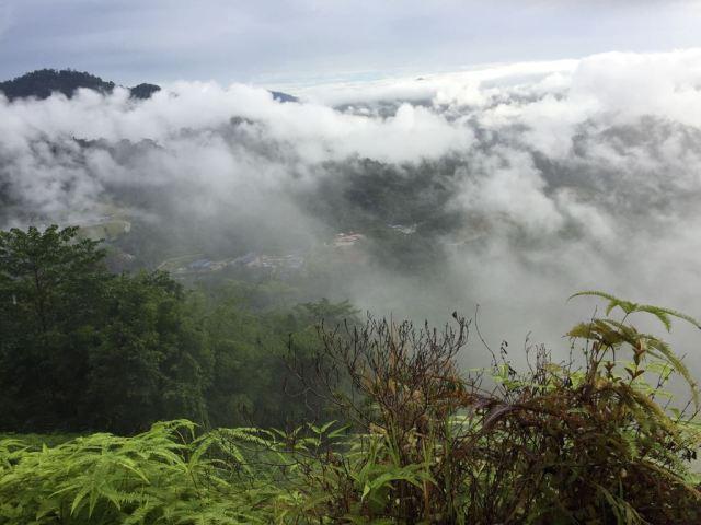 Montañas de Cameron Highland con niebla y mucha vegetación