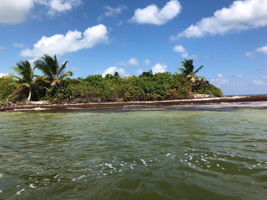 La unión entre el agua dle mar y el dir rio, olas, una isla con una palmera a cada lado y mucha vegetación en medio