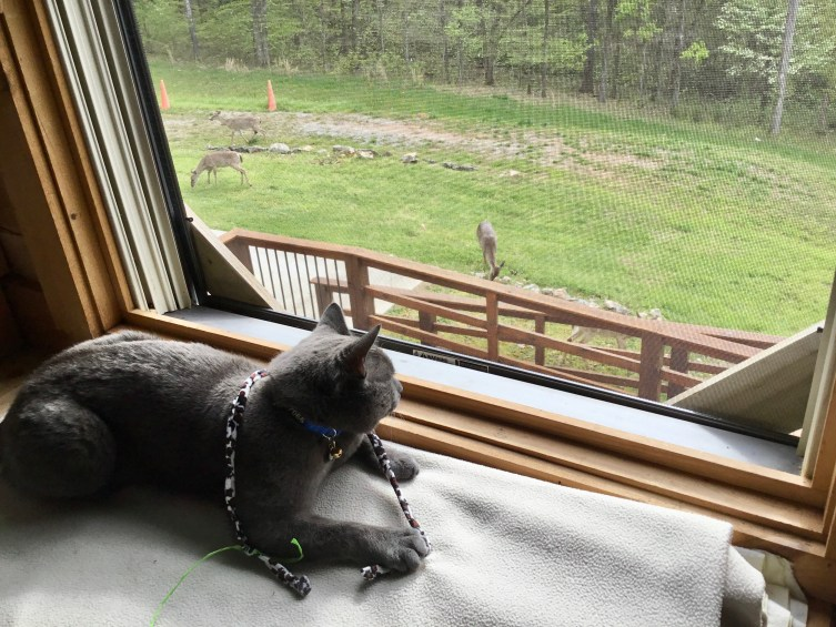 Gunther enjoys a visit by the deer.