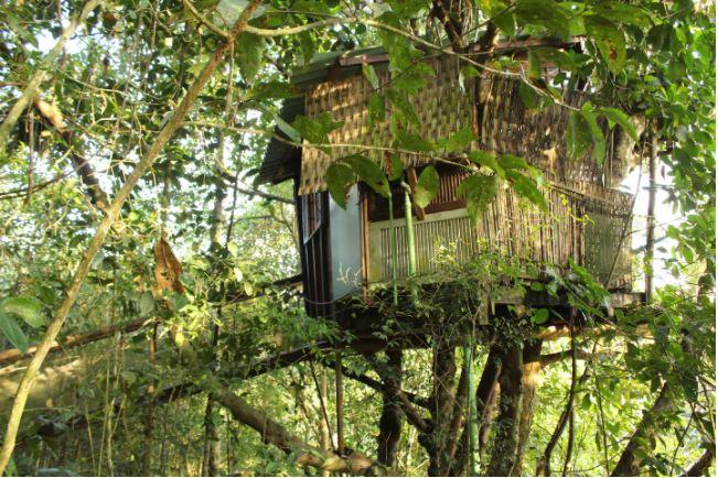 Casas incríveis para alugar no Airbnb perto de RJ e SP / Casa na Árvore em Paraty