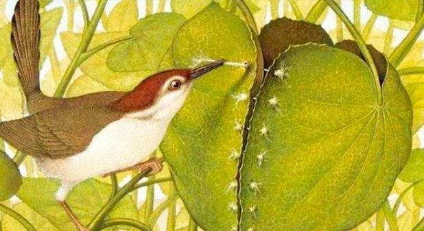 Truyện chim Thợ may