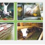catering aqiqah bsd serpong tangerang selatan