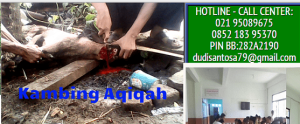 kambing aqiqah cimanggis