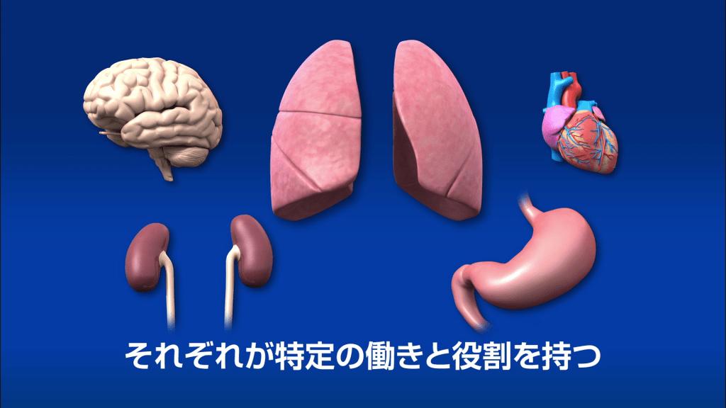 人体の構造と機能  第1巻~第4巻2
