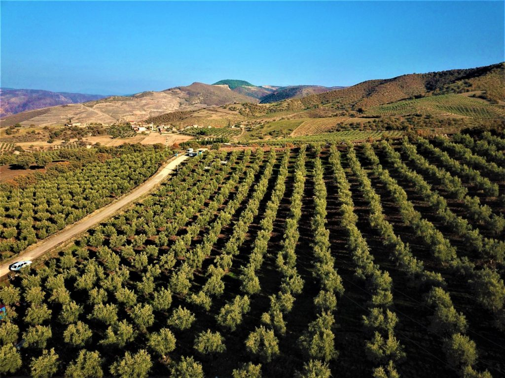 Agricultural land in Turkey