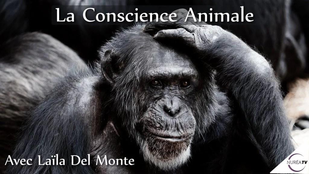 Conscience animale avec Laila Del Monte