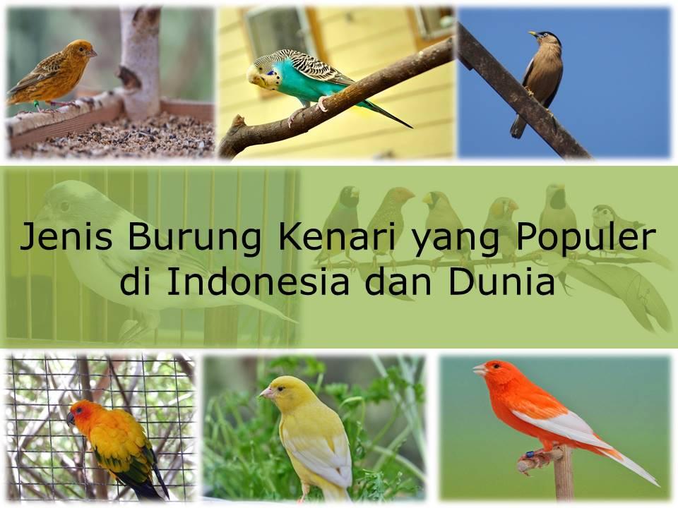 21 Jenis Burung Kenari Cantik Dan Terunik Du Dunia Beserta Gambarnya
