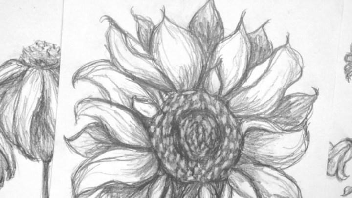 Sketsa Gambar Bunga Matahari