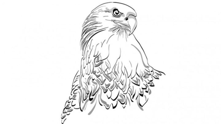 Sketsa Burung Garuda Beserta Makna Gambarnya Nurfasta Com