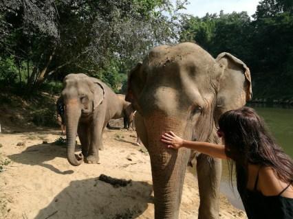 Elephant haven