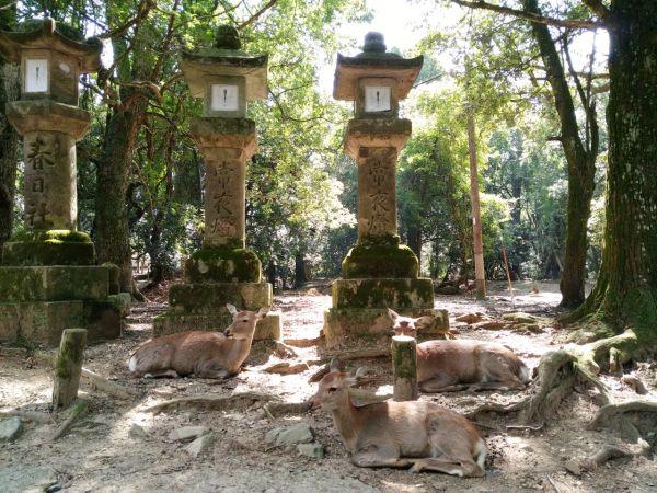 los ciervos de Nara