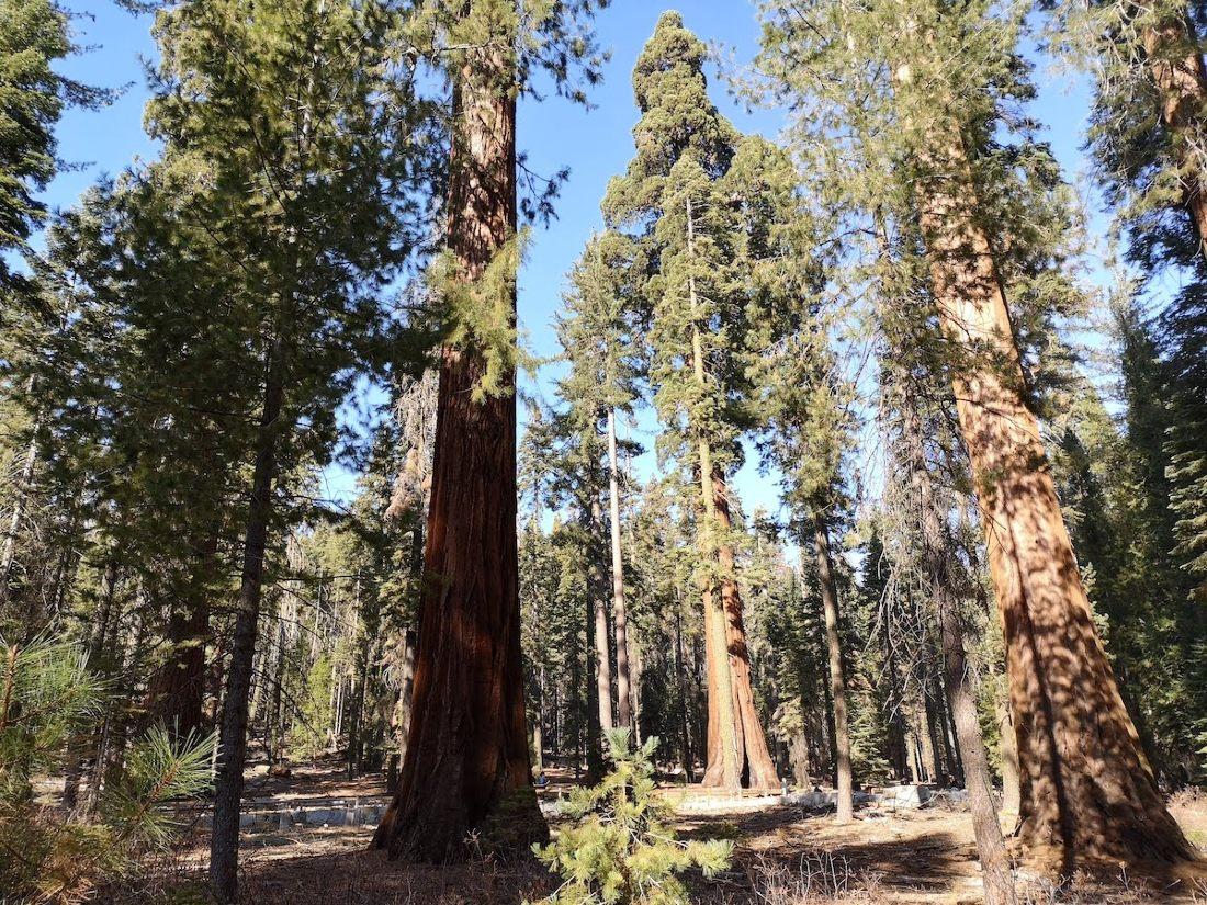 Mariposa groove y las sequoias gigantes