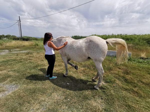 Rutas a caballo por el entorno del Delta