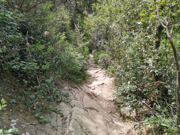 ruta hacia la cascada