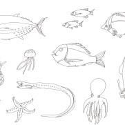海の生き物の塗り絵