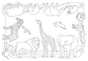 12種類の動物の塗り絵
