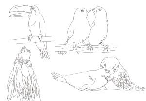 鳥の塗り絵