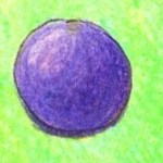 球の塗り絵手本