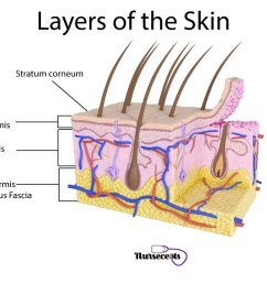 7 facts about the integumentary system every nursing student should know layers of the skin [ 1024 x 768 Pixel ]