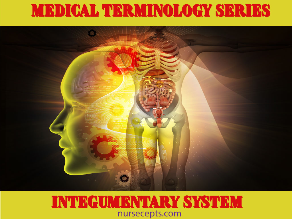 Medical Terminology Of The Integumentary System