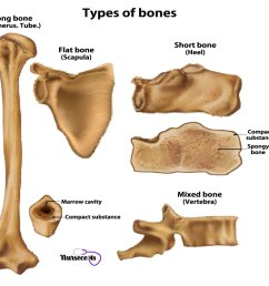 9 facts about the skeletal system bone repair [ 1024 x 768 Pixel ]