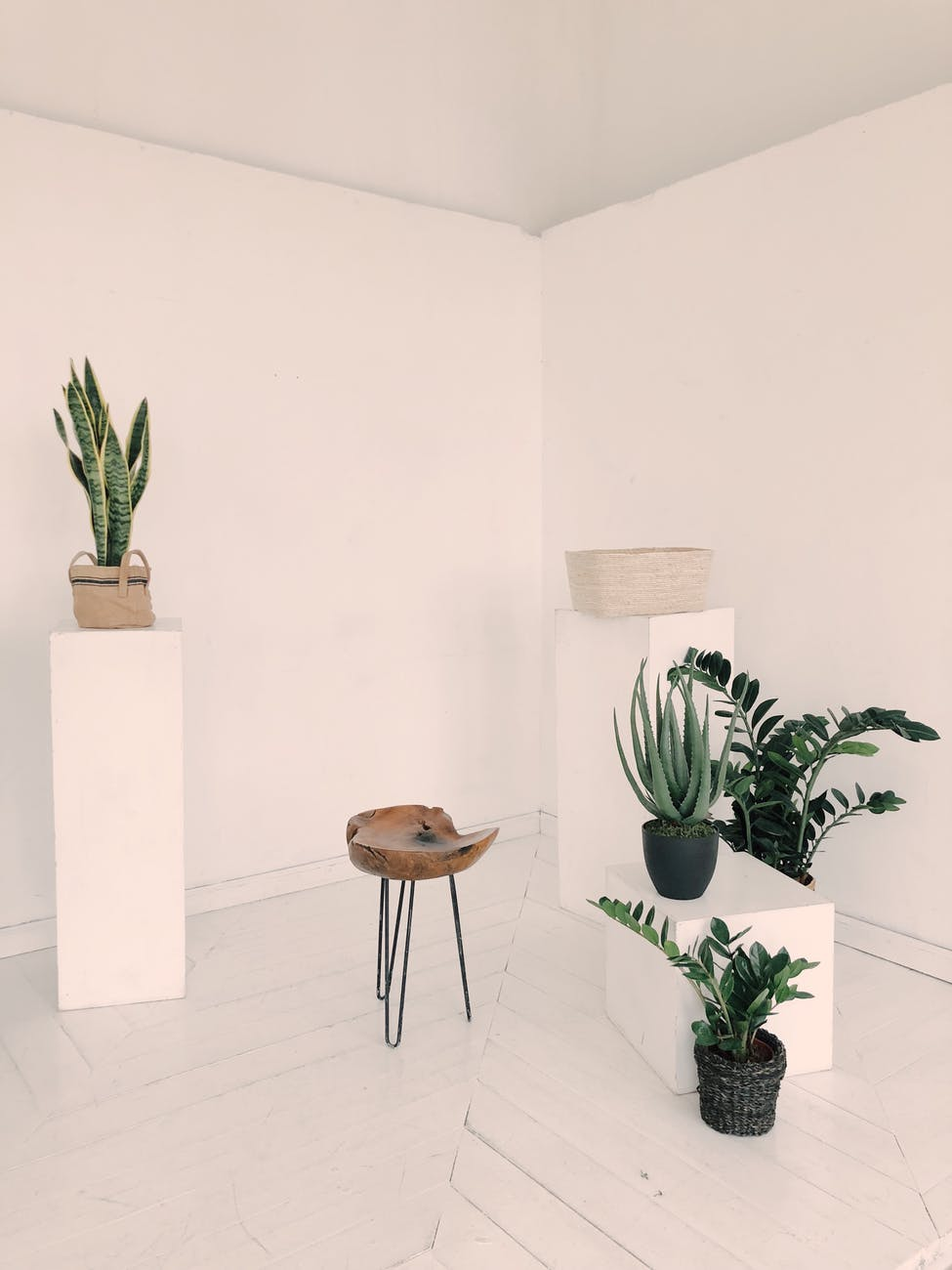 photo of plants near wooden chair