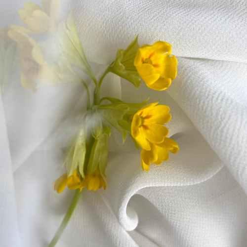 primroses on white crumpled textile