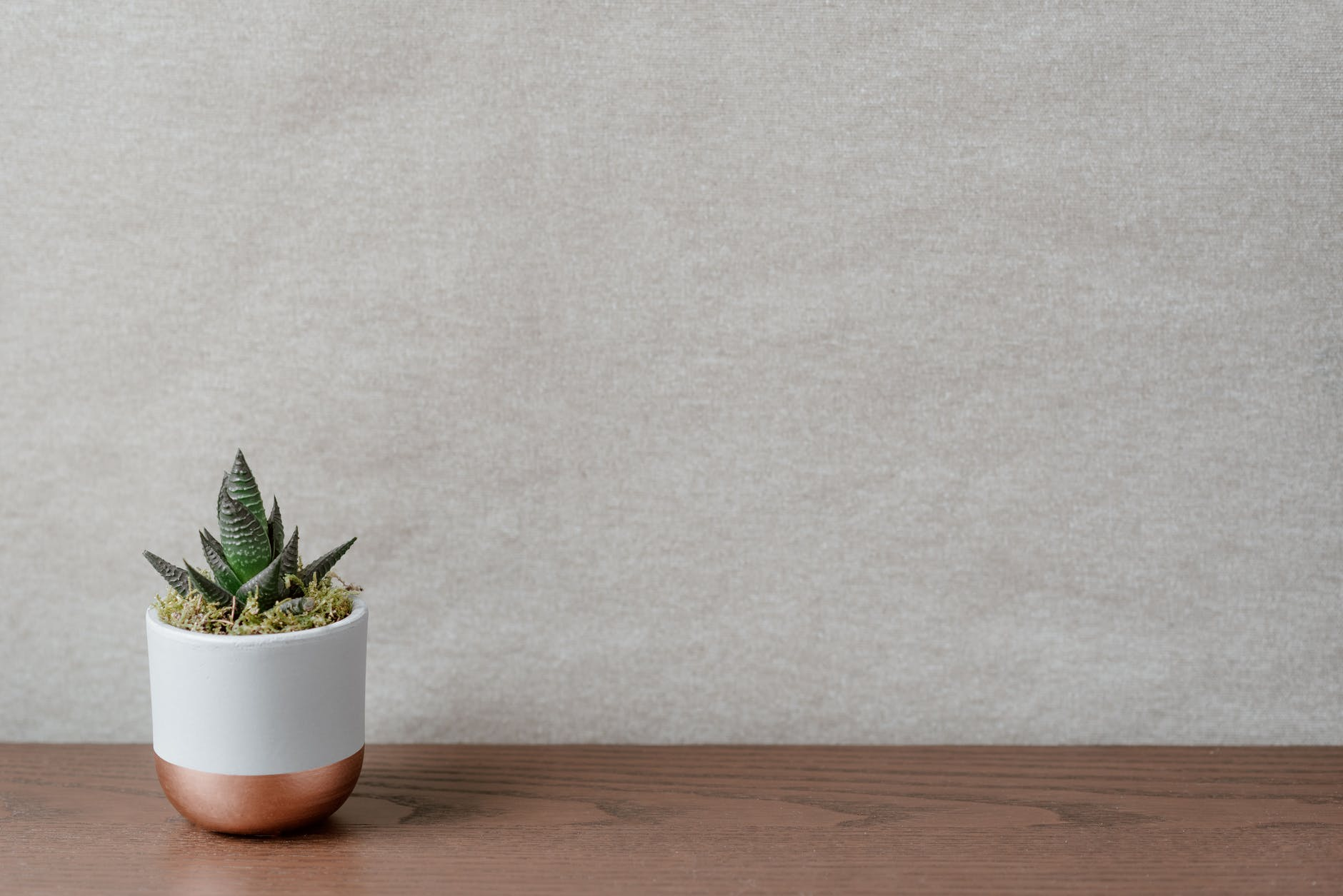 green plant in pot on wooden table in house