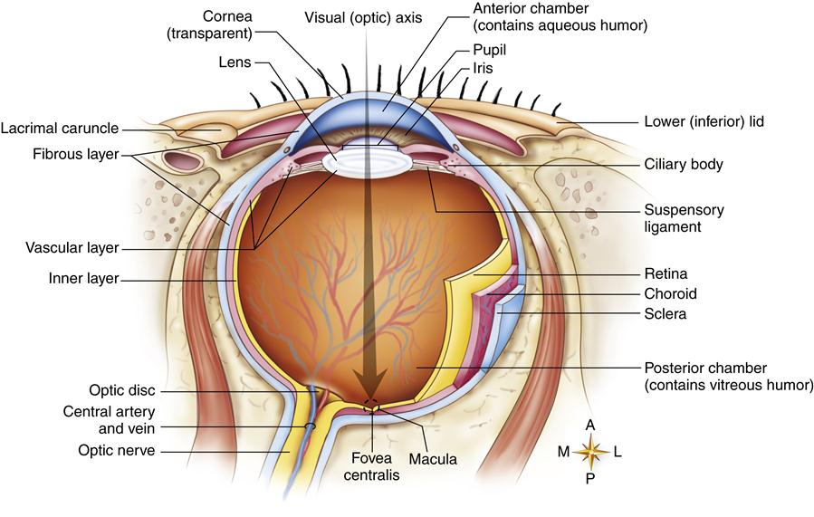 Ophthalmic Drugs | Nurse Key
