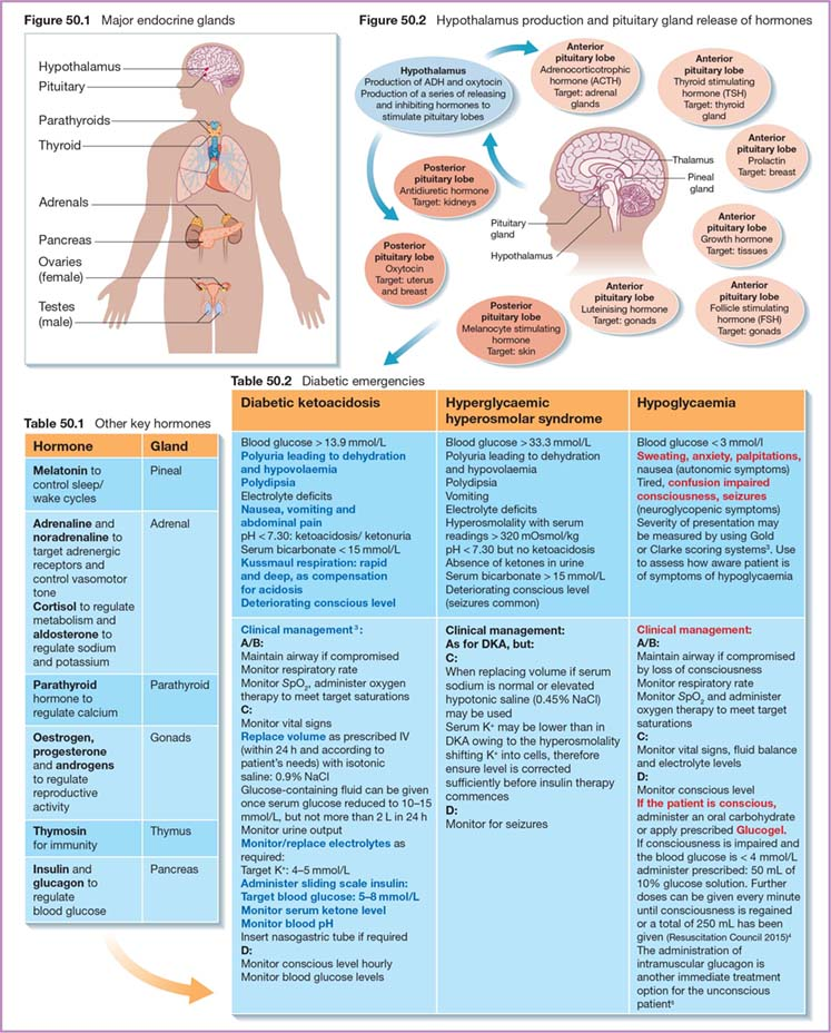 Diagram shows major endocrine glands as pituitary, pancreas, hypothalamus, et cetera, Hypothalamus production and pituitary gland release of hormones, tables for diabetic emergencies, other key hormones, et cetera.