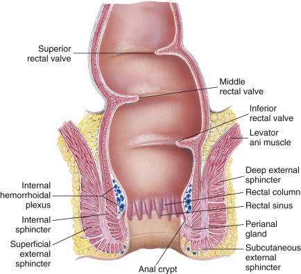 loss of median sulcus prostate